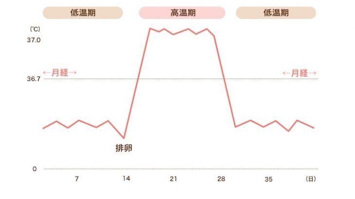 基礎体温グラフの見方