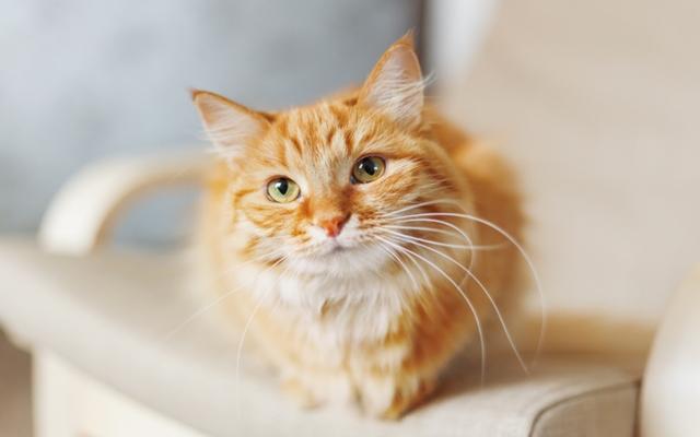 私の更年期を支えてくれる大きな存在は、アラフォーで飼い始めた猫だった【体験談】