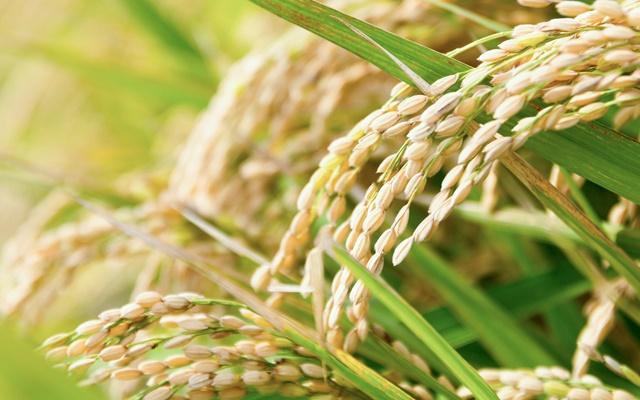食べてきれいになりたい!プチ玄米生活を始めて実感した3つのこと【体験談】
